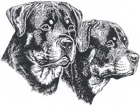 Rottweiler-uroksen ja -nartun pää
