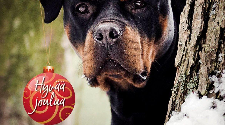 Rottweiler-lehti nro 6/18 digilehtenä